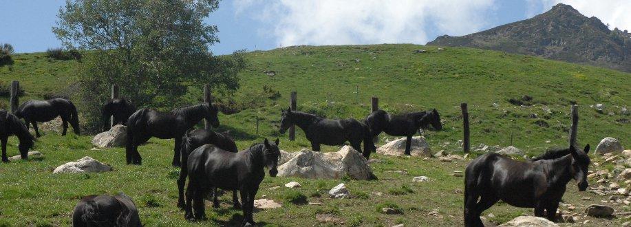 Enclos à chevaux